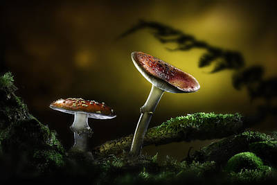 Fly Mushroom - Red Autumn Colors Poster by Dirk Ercken