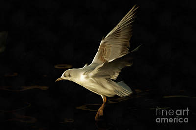 Flying Gull Above Water Poster by Michal Boubin