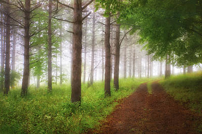 Foggy Forest - Retzer Nature Center Trails Poster by Jennifer Rondinelli Reilly