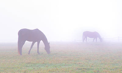 Foggy Horse Farm In Whitemarsh Pa Poster by Bill Cannon