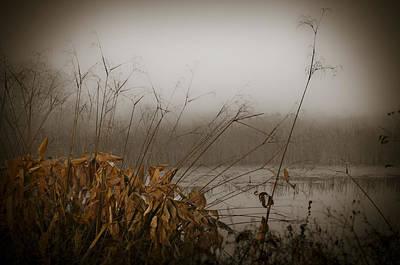 Foggy Morning Marsh Poster by Carolyn Marshall
