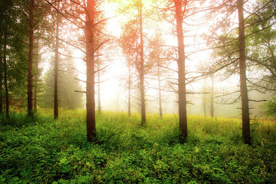 Foggy Morning - Retzer Nature Center Trails Poster by Jennifer Rondinelli Reilly