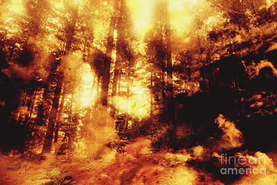 Forest Fires Poster by Jorgo Photography - Wall Art Gallery