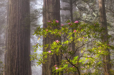 Forest Fog And Blooms Poster by Patricia Davidson