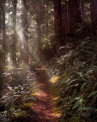 Forest Path Poster by Leland D Howard