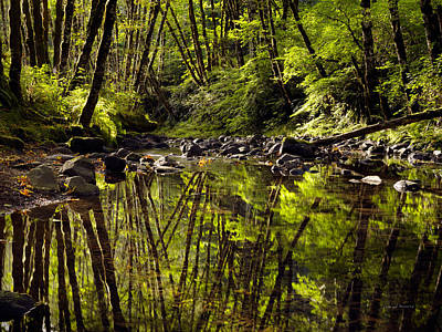 Forest Reflections Poster by Leland D Howard