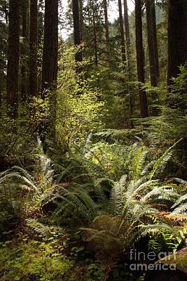Forest Sunlight And Shadows  Poster by Carol Groenen