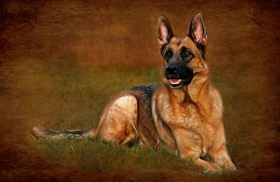 Forrest The German Shepherd Poster by Angie Tirado