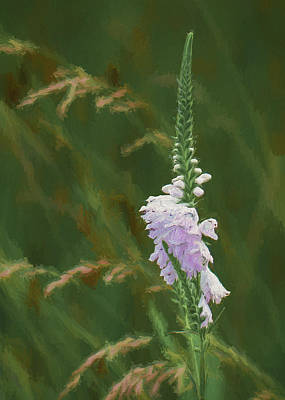 Foxglove In Bloom Poster by James Barber