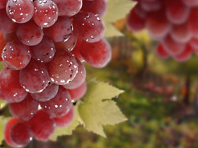 Fresh Grapes On Vine Poster by Lanjee Chee