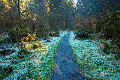 Frosty Forest Path Poster by Jamie Pham