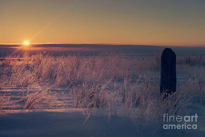 Frozen Field Sunrise Poster by Ian McGregor