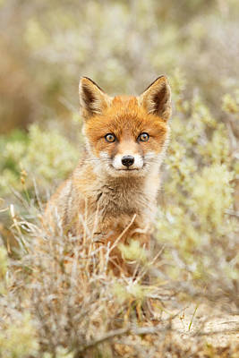 Funny Face Fox Poster by Roeselien Raimond