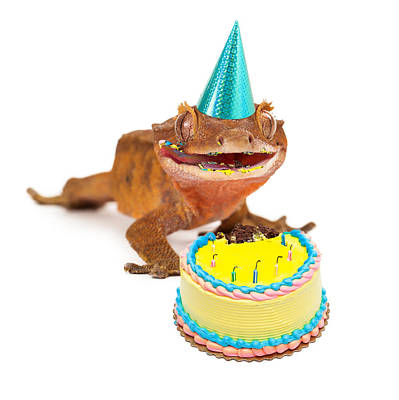 Funny Gecko Lizard Eating Birthday Cake Poster by Susan Schmitz