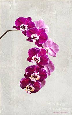Fuschia Orchid Spray - 22.5 X 36 Poster by Barbara McMahon