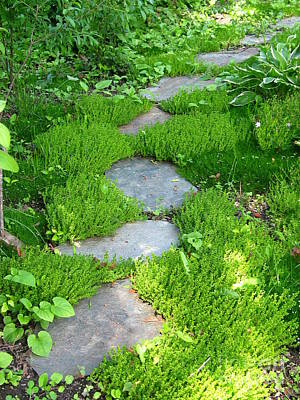 Garden Path Poster by Idaho Scenic Images Linda Lantzy