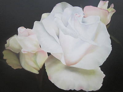Garden Roses Poster by Maro Kirby