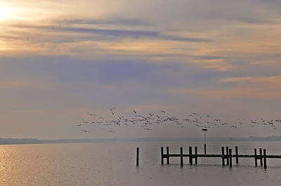 Geese Over The Chesapeake Poster by Bill Cannon