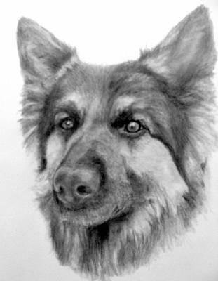 German Shepherd Poster by Susan Tilley