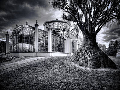 Glasshouse And Tree Poster by Wayne Sherriff