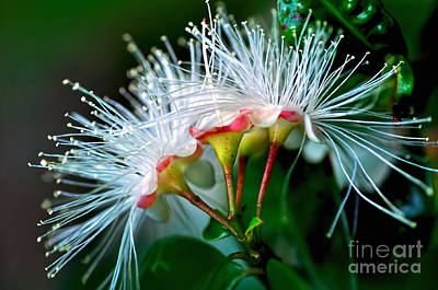 Glowing Needles Poster by Kaye Menner