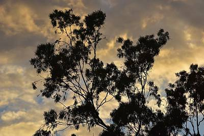 Gold Sunset Tree Silhouette I Poster by Linda Brody