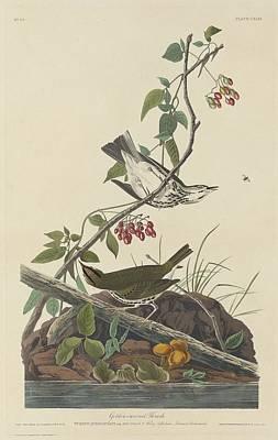 Golden-crowned Thrush Poster by John James Audubon