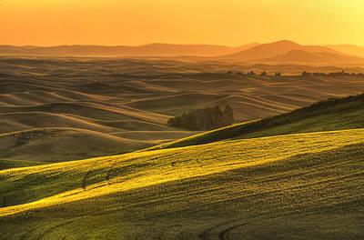 Golden Grains Poster by Mark Kiver