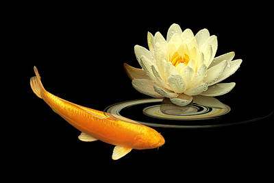 Golden Harmony - Koi Carp With Water Lily Poster by Gill Billington