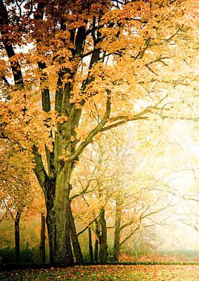 Golden Tree Poster by Maggie Terlecki