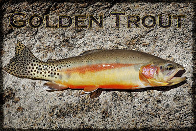 Golden Trout Poster by Kelley King