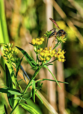 Goldenrod And Wasp - Paint Poster by Steve Harrington