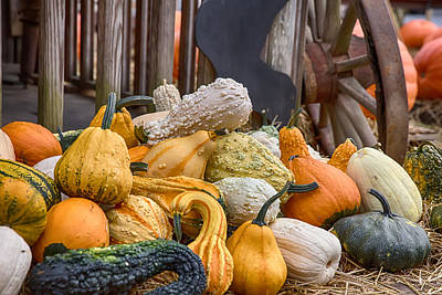 Gourds Of Many Colors Poster by John Haldane