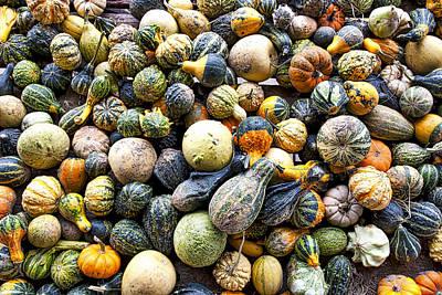 Gourds Pumpkins - Wisconsin  Poster by Steven Ralser