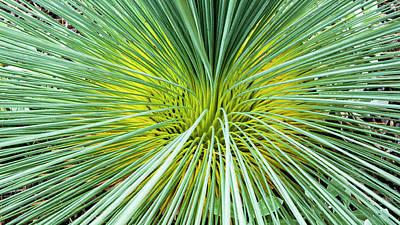 Grass Tree - Canberra - Australia Poster by Steven Ralser