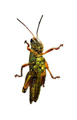 Grasshopper II Poster by Gary Adkins