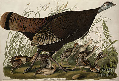 Great American Hen And Young Poster by John James Audubon