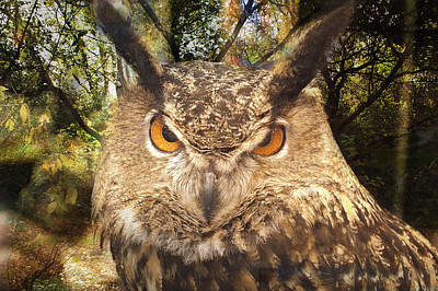 Great Horned Owl 3 Poster by Marty Koch