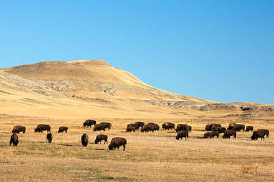 Great Plains Buffalo Poster by Todd Klassy