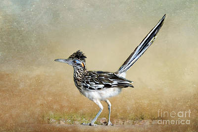 Greater Roadrunner 2 Poster by Betty LaRue