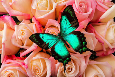 Green Butterfly On Pink Roses Poster by Garry Gay