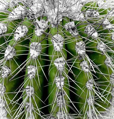 Green Cactus Poster by Frank Tschakert