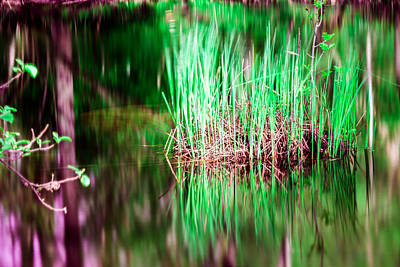 Green Grass In Water Poster by Toppart Sweden