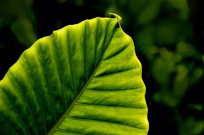 Green Leaf Poster by Lyle  Huisken