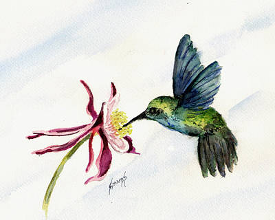 Green Violet-ear Hummingbird Poster by Sam Sidders