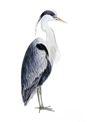 Grey Heron Poster by Marie Burke
