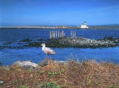 Gull And Lighthouse Poster by Jim Nelson