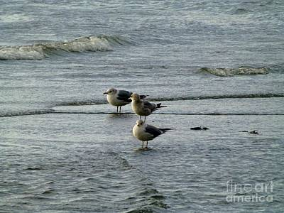 Gulls At A Seattle Beach Poster by As the Dinosaur Flies Photography