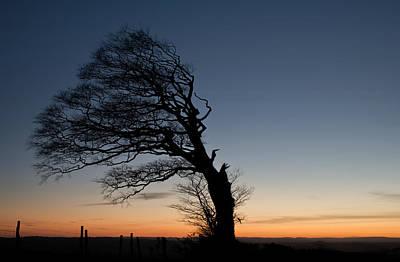 Half A Tree On Raddon Top Poster by Pete Hemington