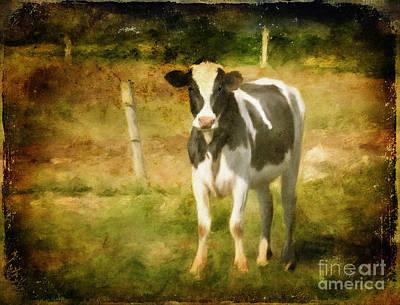 Handsome Holstein Poster by Lois Bryan